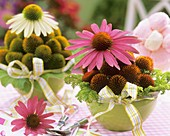 Two arrangements of purple coneflower (Echinacea purpurea)