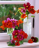 Nasturtiums and Cosmos on a windowsill