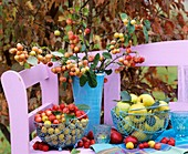 Ornamental apple branches, ornamental apples, apples & quinces