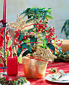Spitzblume weihnachtlich dekoriert