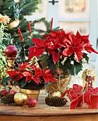 Weihnachtssterne mit Adventsdeko