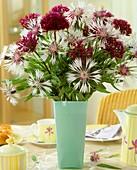 Frühsommerstrauß aus Flockenblumen und Zierlauch 'Atropurpureum'