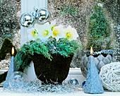 Winterliche Dekoration mit Christrosen und Zypressenzweigen