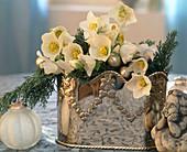 Silbervase mit Christrosen zu Weihnachten