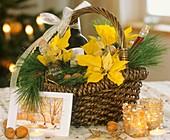 Geschenkkorb mit Weihnachtsstern und Seidenkiefer