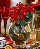 Weihnachtsstern in Glasvase mit Moos, Orangenscheiben & Zimt