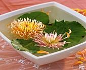 Zwei Kaktusdahlien und Bergenienblätter in einer Wasserschale