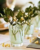 Mistelzweig in Wasserglas mit Perlen