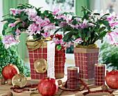 Weihnachtskaktus mit Baumschmuck und Granatäpfeln