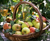 Fresh picked apples (variety 'James Grieve') in basket