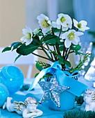 Christrose in blauem Blumentopf