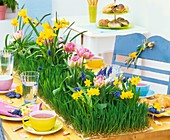 Spring table with wheat grass, daffodils and tulips