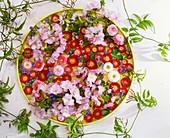 Blüten von Tausendschön, Zierkirsche und Vergissmeinnicht