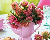 Lenzrosen in rosa Kaffeekanne