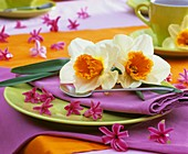 Place-setting decorated with Narcissi and hyacinth flowers