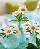 Margeriten in drei Vasen