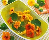 Nasturtium flowers in a rectangular bowl