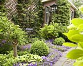 Sommerlicher Garten mit Glockenblumen vor Backsteinfassade