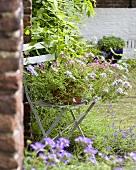 Verbena in flowerpot on garden chair