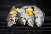 Four trout with herbs and lemon on a barbecue rack