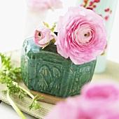 Pink ranunculus (Ranunculus asiaticus) in ceramic vase