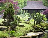Bemooste Steine und Bonsaibäume in japanischem Garten mit Teehaus im Hintergrund