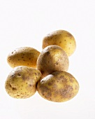 Five potatoes, variety 'Milva'