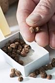 Hand holding watercress seeds (close-up)