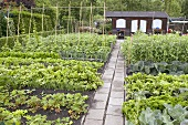 Vegetable garden with wooden summer house