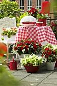 Terrasse mit Gartenmöbeln und Sommerblumen