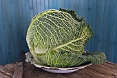 Savoy cabbage on old plate with knife