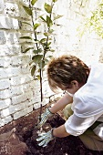 Woman planting espalier tree