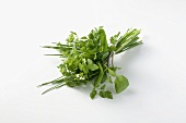 Bunch of spring herbs
