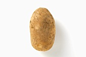 Main crop potato