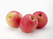 Three apples (variety 'Pink Lady') with drops of water