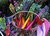 Chard with coloured stems in a wicker basket