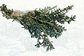Frozen thyme on ice