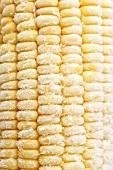 Frozen corn on the cob (close-up)
