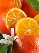 Oranges and orange blossom