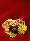 Various types of radicchio on red background