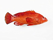 A strawberry grouper