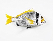 A yellowfin sea bream