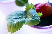 Strawberry leaf and strawberry