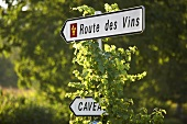 Wine route in the Jura, France