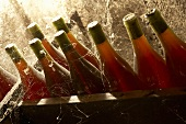 Weinkeller mit Rotweinflaschen im Jura, Frankreich