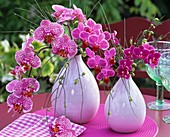 Pink orchids (Phalaenopsis) and broom in vases