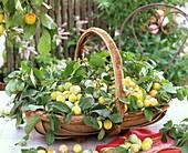 Mirabellen mit Blättern im Korb