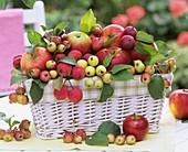 Äpfel und Zieräpfel im Korb