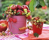 Apples and crab apples in small buckets