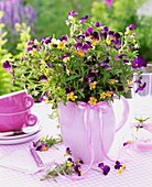 Horned violets in a jug, cups and windlight